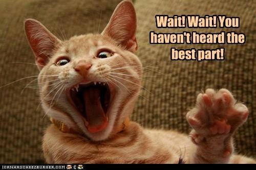 cat-wait-wait
